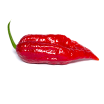 Bhut Ghost Jolokia Red